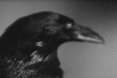 der-rabe-1951-the-raven-steinwendner-05