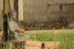 der-zornige-buddha-2016-ludwig-05