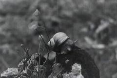 lunz-und-seine-seen-1934-aavv-01