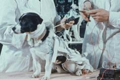 space-dogs-2019-kremser-peter-01