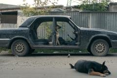 space-dogs-2019-kremser-peter-05
