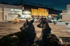 space-dogs-2019-kremser-peter-recensione