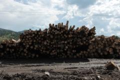 wood-2020-sinziger-kirst-lazurean-gorgan-06