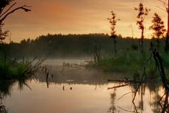 zalesie-2018-virgin-woods-zborowska-02
