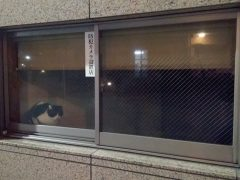 japan-2019-ritter-recensione