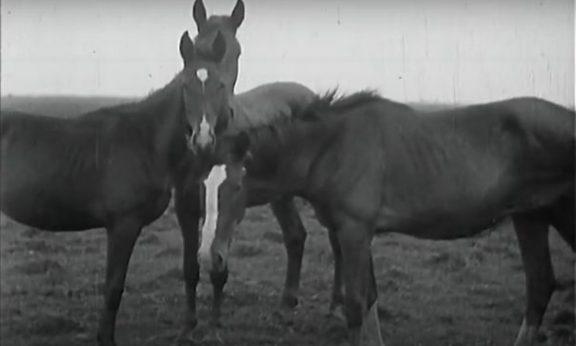 der-heideboden-1933-aavv-recensione